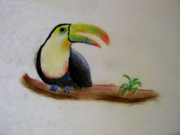 Toucan (2005) soft pastels on paper - Pui Lee